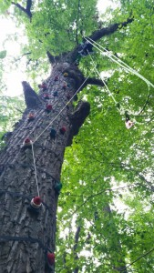 The Rock Climbing Tree at Treehouse World