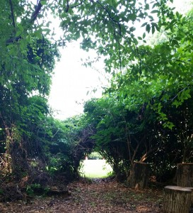 hedge row tunnel